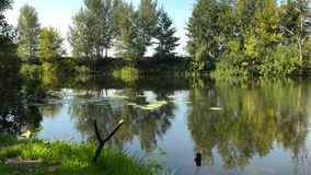 Time lapse view of the river in a clear sunny summer day and reflection of trees in the water. Ukraine stock footage