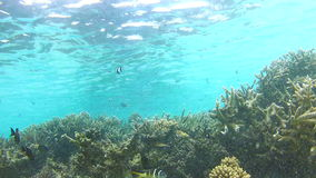Time Lapse View Of Underwater Tropical Ocean. Time lapse sequence of fish swimming around tropical reef.Shot on Canon 5d Mk2 with a frame rate of 30fps stock video