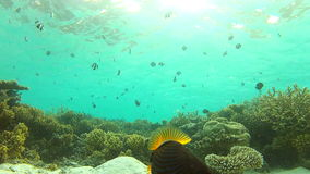 Time Lapse View Of Underwater Tropical Ocean Stock Photos