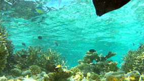 Time Lapse View Of Underwater Tropical Ocean Royalty Free Stock Images
