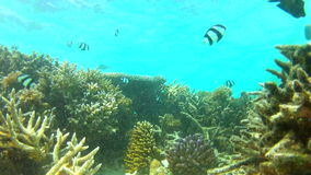 Time Lapse View Of Underwater Tropical Ocean. Time lapse sequence of fish swimming around tropical reef.Shot on Canon 5d Mk2 with a frame rate of 30fps stock footage