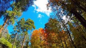 Time Lapse von Fall-Farben und von treibenden Wolken stock video