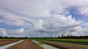 Time lapse of white clouds with blue sky over the vegetable plot. stock video