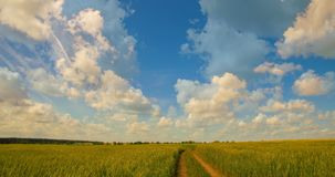 Time-lapse: white clouds flying on blue sky over yellow field stock footage