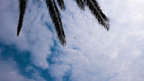 Time lapse, white clouds move by wind on blue sky and over top. Foreground palm branches stock video footage