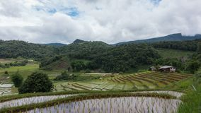 Time lapse of white clouds over rice terrace. stock video