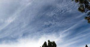 Time Lapse Wispy Clouds In Blue Sky Tree Branches 4K. Time Lapse With Tree Branches Wispy White Clouds In Blue Sky 4K stock video footage
