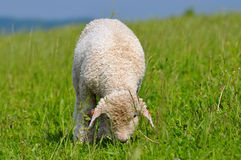 Time for pasture Stock Photography