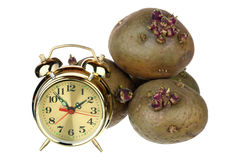 Time for planting potatoes Royalty Free Stock Photos
