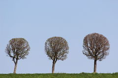 For the time present without leaves Stock Photography