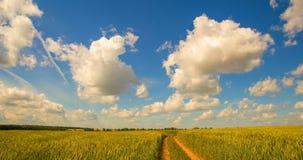 Time-schackningsperiod: vit fördunklar flyg på blå himmel över gult fält arkivfilmer
