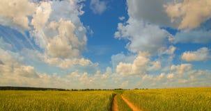 Time-schackningsperiod: vit fördunklar flyg på blå himmel över gult fält lager videofilmer