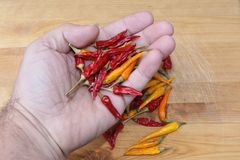 This time some red and yellow dried chillies. Dried red and yellow chillies for seasoning your meal and spice up your life Stock Photo