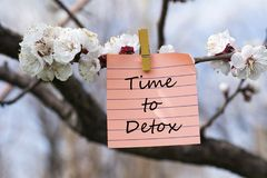Time to detox in memo. Pined on tree with blooms Royalty Free Stock Image