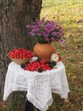 Time to gather hawthorn. Country composition on the theme of the gathering hawthorn stock image