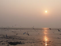 Time to go home, moment of the sea, sun and birds. Its time to go home. The sun is setting and reflecting on the mud, Bangpu, Thailand Royalty Free Stock Image