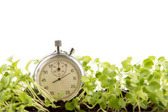 Time to grow - business profit concept Royalty Free Stock Image