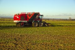 Time to harvest the sugar beet. Lincolnshire Stock Photo