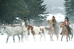 Time to move the herd. Trail hands moving a herd of horses stock image