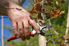Time to Prune Stock Image
