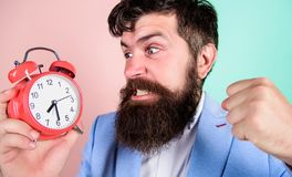 Time to work. Man bearded aggressive businessman hold clock. Stress concept. Hipster stressful working schedule stock photo