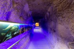 Time tunnel in prehistoric exhibition royalty free stock photo
