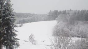 Timelaps雪在一座山的风暴视图与森林 股票录像