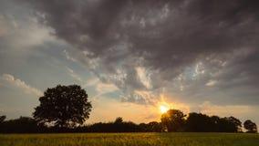 Timelaps av att flytta fluffiga moln i aftonhimlen under solnedgång över den ensamma eken i ett veteängfält stock video