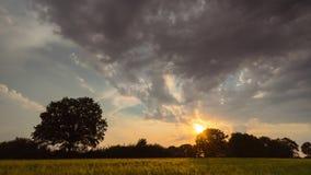 Timelaps de déplacer les nuages pelucheux dans le ciel de soirée pendant le coucher du soleil au-dessus du chêne isolé dans un do banque de vidéos