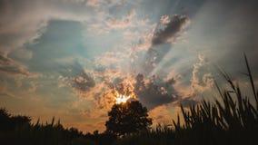 Timelaps de mover nuvens macias no céu da noite e o por do sol sobre o carvalho só em um prado do trigo colocam vídeos de arquivo