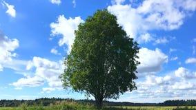 Timelaps van een boom op een gebied onder de macht van de wind stock footage