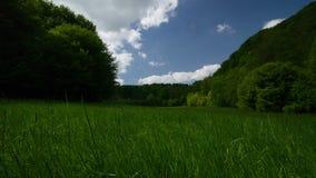Timelapse草地早熟禾森林天空覆盖4k UHD 影视素材