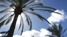 Timelapse,与云彩的棕榈树 股票录像