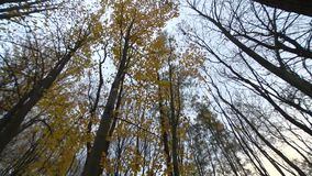 Timelapse - δάσος το φθινόπωρο απόθεμα βίντεο