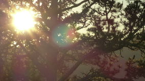 Timelapse του ήλιου που θέτει πίσω από τους κλάδους δέντρων απόθεμα βίντεο