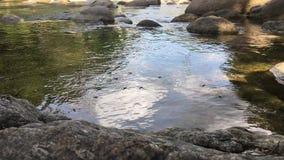 Timelapse του νερού Striders ή των σκέιτερ Gerris Lacustris λιμνών στο ρεύμα απόθεμα βίντεο
