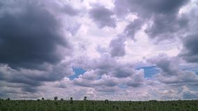 Timelapse του πανέμορφου ουρανού επάνω από τον τομέα ηλίανθων απόθεμα βίντεο