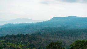 Timelapse του τροπικού δάσους στη Νοτιοανατολική Ασία : Πόνος Sida απόθεμα βίντεο