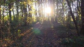Timelapse захода солнца леса видеоматериал