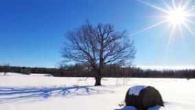 Timelapse зимы видеоматериал