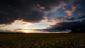 Timelapse цветков рапса на вечере Красивый заход солнца с темно-синим небом, ярким солнечным светом и облаками сток-видео