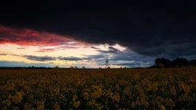 Timelapse цветков рапса на вечере Красивый заход солнца с темно-синим небом, ярким солнечным светом и облаками акции видеоматериалы
