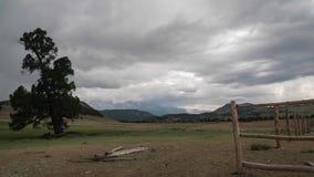 Timelapse 与雨的云彩在背景中盖积雪覆盖的山 一棵巨大的针叶树在震动 股票录像