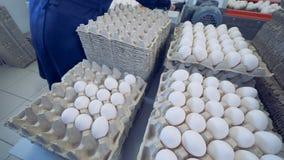 Timelapse 禽畜的工作者在条板箱投入了新鲜的鸡蛋 家禽场 股票视频