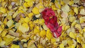 Timelapse Achtergrond in de vorm van hart van de herfstbladeren stock video