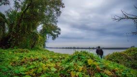 Timelapse auf dem Fluss mitten in Grünpflanzen und einem Baum bedeckt mit Blättern am Abend stock footage