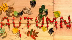 Timelapse: Autumn stock video footage