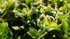 Timelapse av djupfryst gräs och sidor på soluppgång stock video