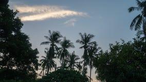 Timelapse av tropiska palmträd på soluppgång i morgonen Moln som flyttar sig på gryning stock video