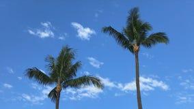 Timelapse av två palmträd, vita moln och månen lager videofilmer